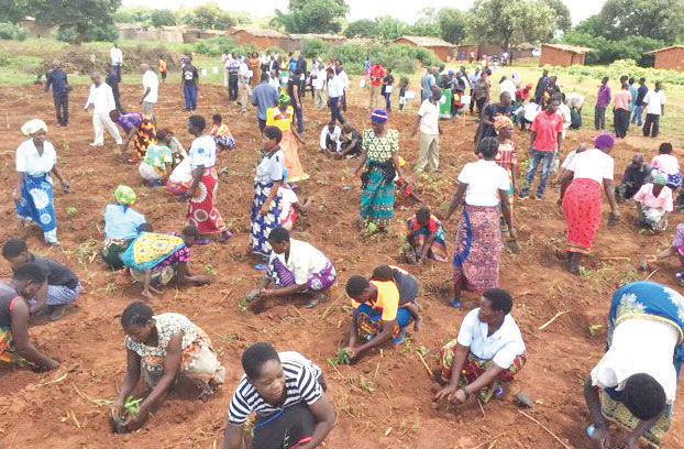 , Tobacco Commission plans tree planting laws