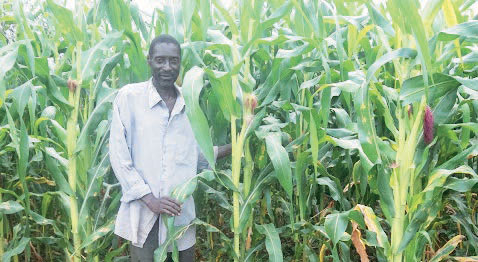 Maize output to rise by 9%