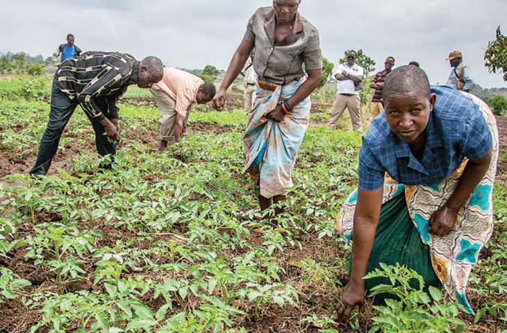 'Farmers are being duped' - The Times Group Malawi