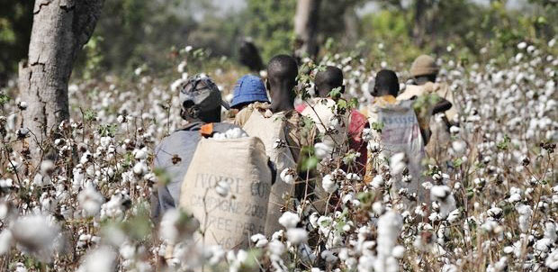 AICC seeks government's attention in cotton