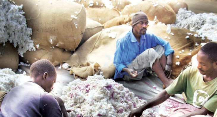Cotton farmers feel abandoned - The Times Group Malawi
