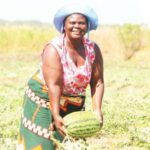 'Watermelons demand surge' - The Times Group Malawi
