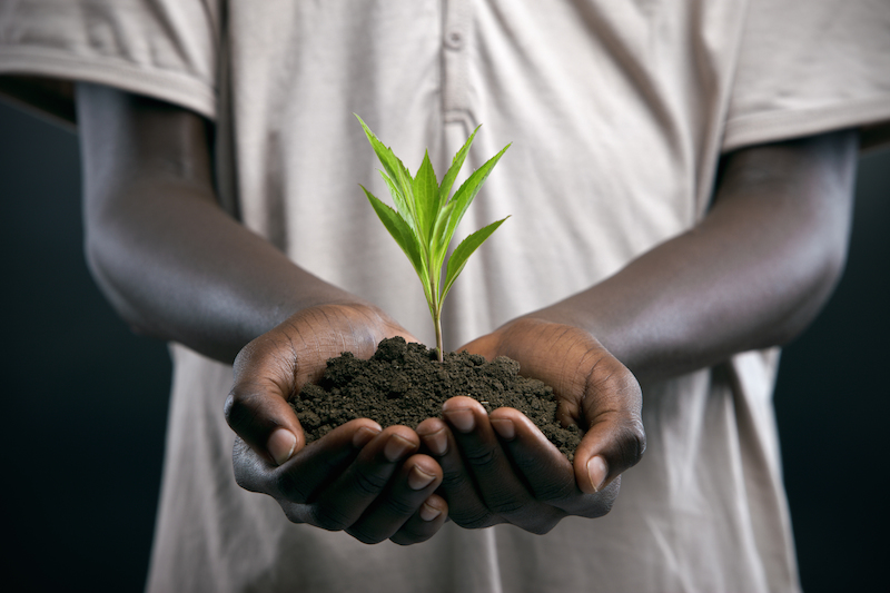 Black hand holding compost soil in Africa