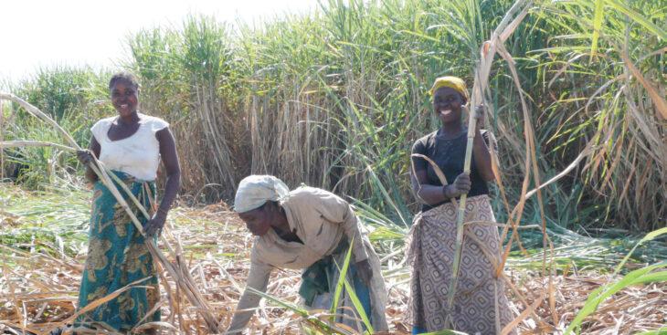 Government speaks on sugar earnings