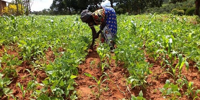 black african woman farmer