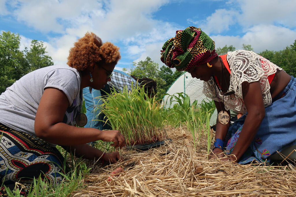 Black women farmers with compost soil