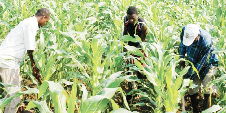 Firm raises $6 million for farmers' insurance