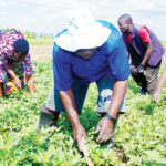 Group laments Covid effect on agriculture